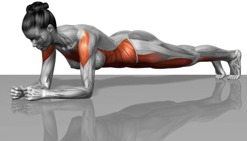 plank-muscles-worked2.jpg