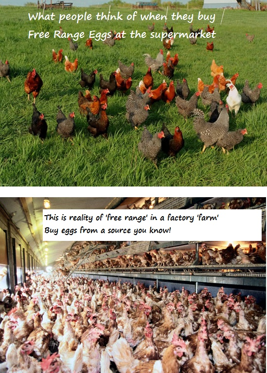 d65eec51a4825bb1a167cc1a7c2a4e74--organic-eggs-egg-free