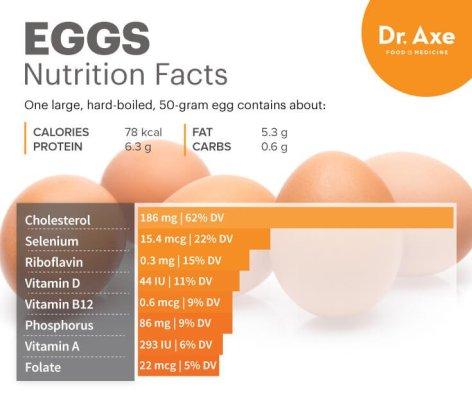 EggNutrition