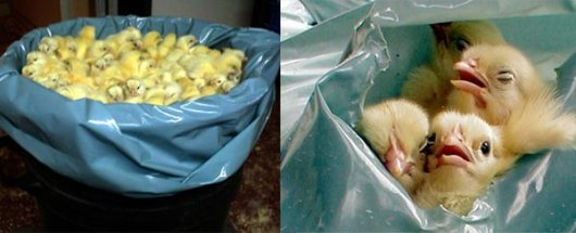 Suffocation-in-plastic-bags